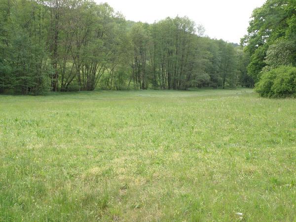 Naturschutzgebiet Sommerberg, Feuchtwiese