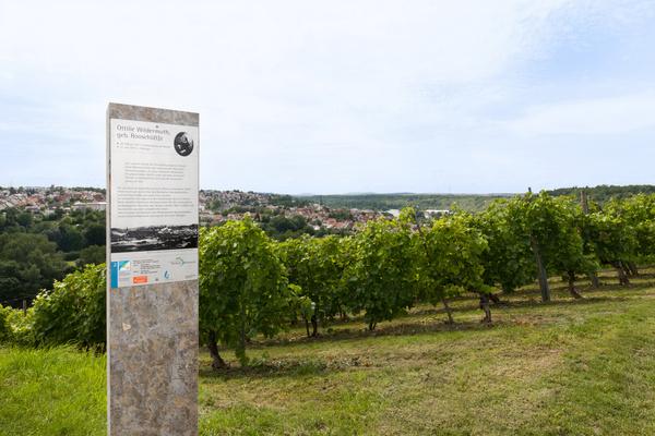 Wein-Lese-Weg / Foto: Corinna Jacobs, Copyright: TGMB Marbach