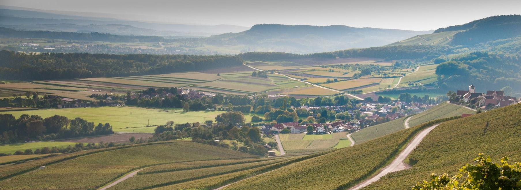 Panorama Weinbau am Stromberg 20140928_Stromberg_53_Druck.jpg