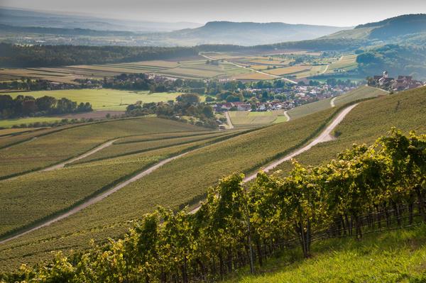 Panorama Weinbau am Stromberg