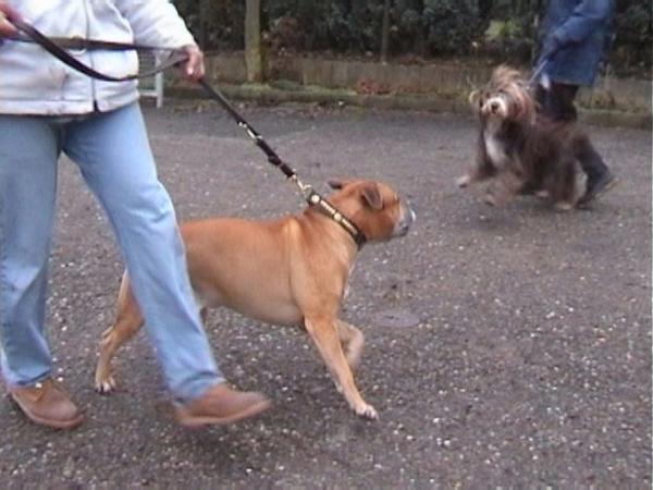 Konfrontation mit einem fremden Hund